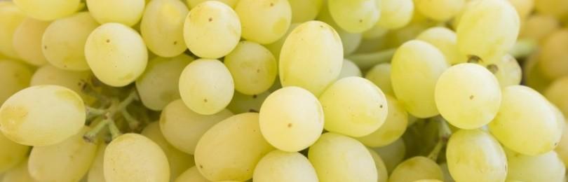 Описание виноградного сорта Лора