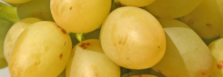 Разновидности и выращивание винограда сорта Аркадия