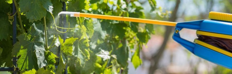 Как обработать виноград медным купоросом?