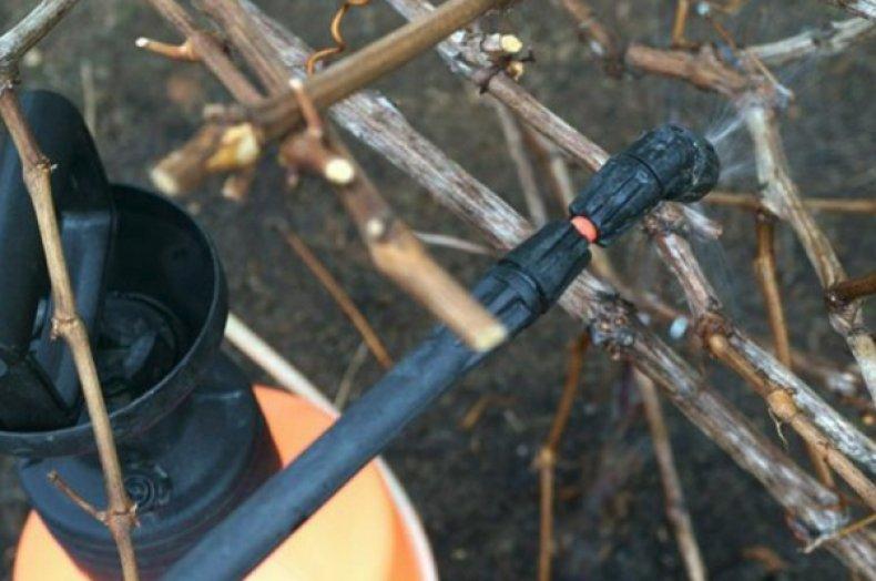 железный купорос для винограда